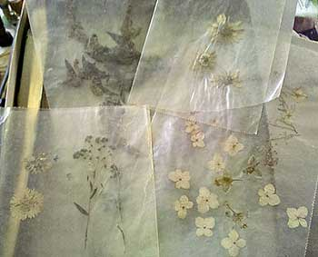 Dried and pressed flowers