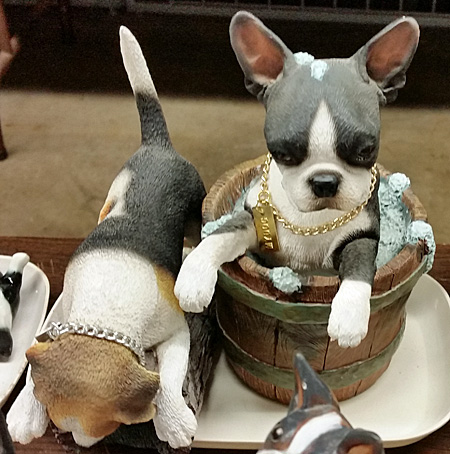 Cute little Boston Terriers.