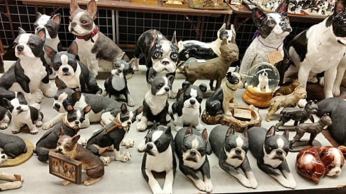A table full of Boston Terriers.