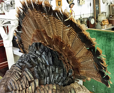 The tail feathers of the stuffed turkey.